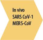 Step 2 - In vivo MERS-CoV